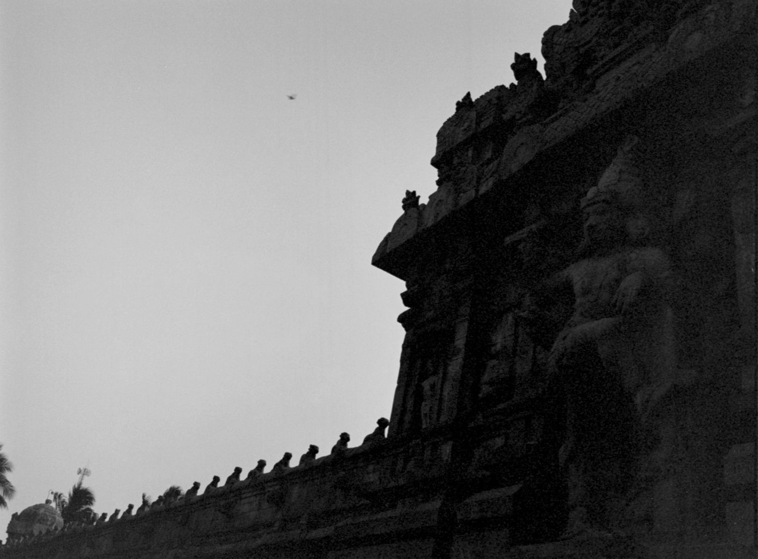 Nandis on the wall, Thanjavur, Tanjore 2014   Edition 1 of 2