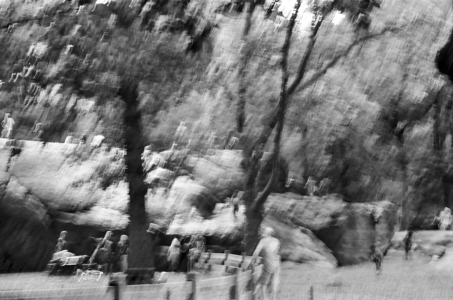 Central Park, New York 2014   Edition 1 of 2