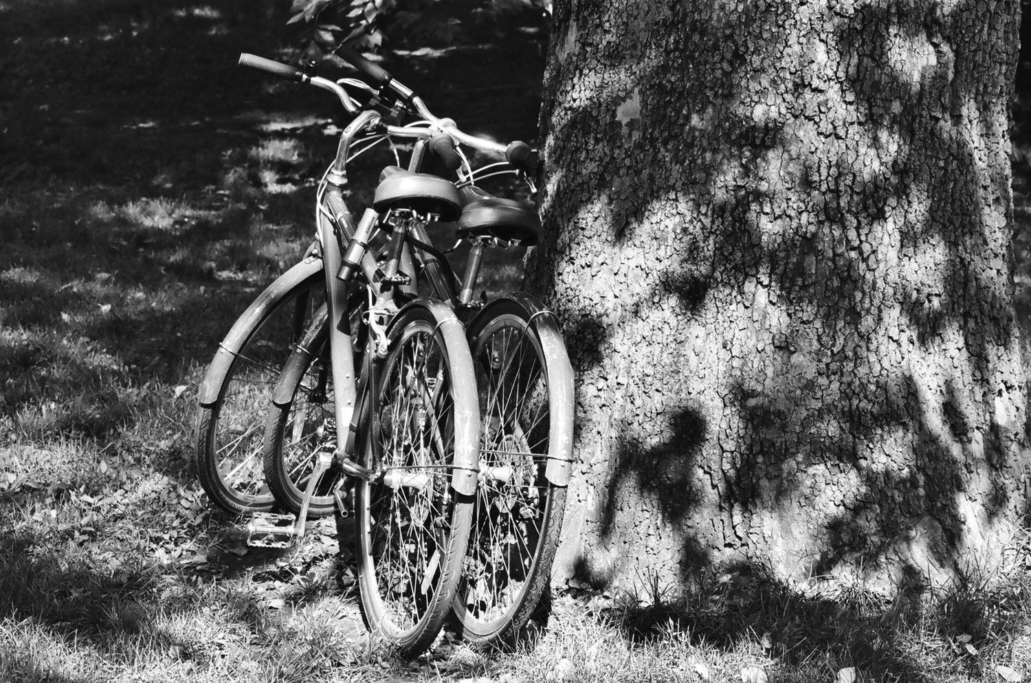 Bicycles by the Tree, New York 2014   Edition 1 of 2