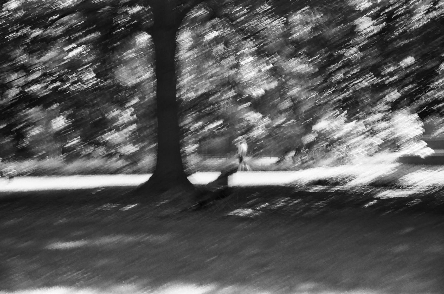 Blur in Central Park, New York 2014   Edition 1 of 2