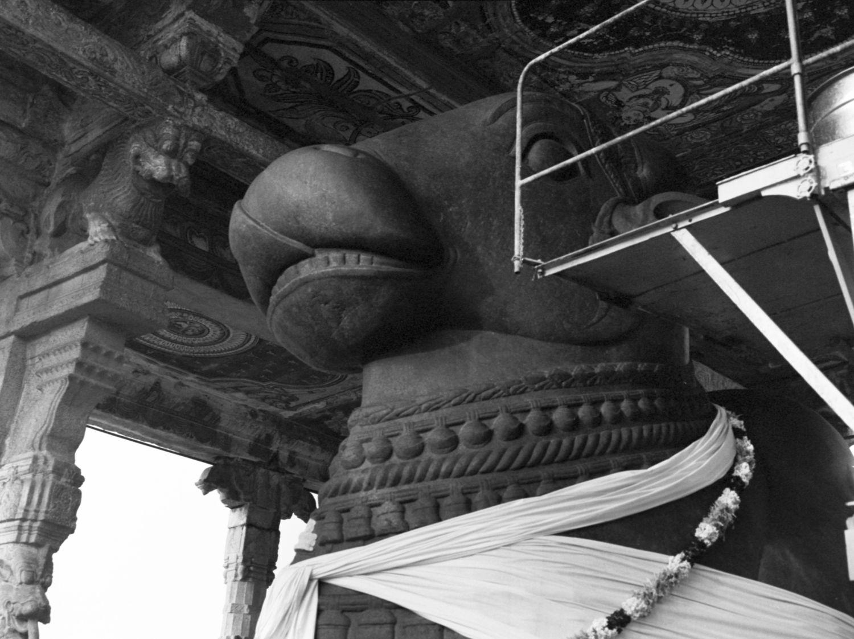 Nandi at Brihadisvara Temple, Thanjavur, Tanjore 2014   Edition 1 of 2