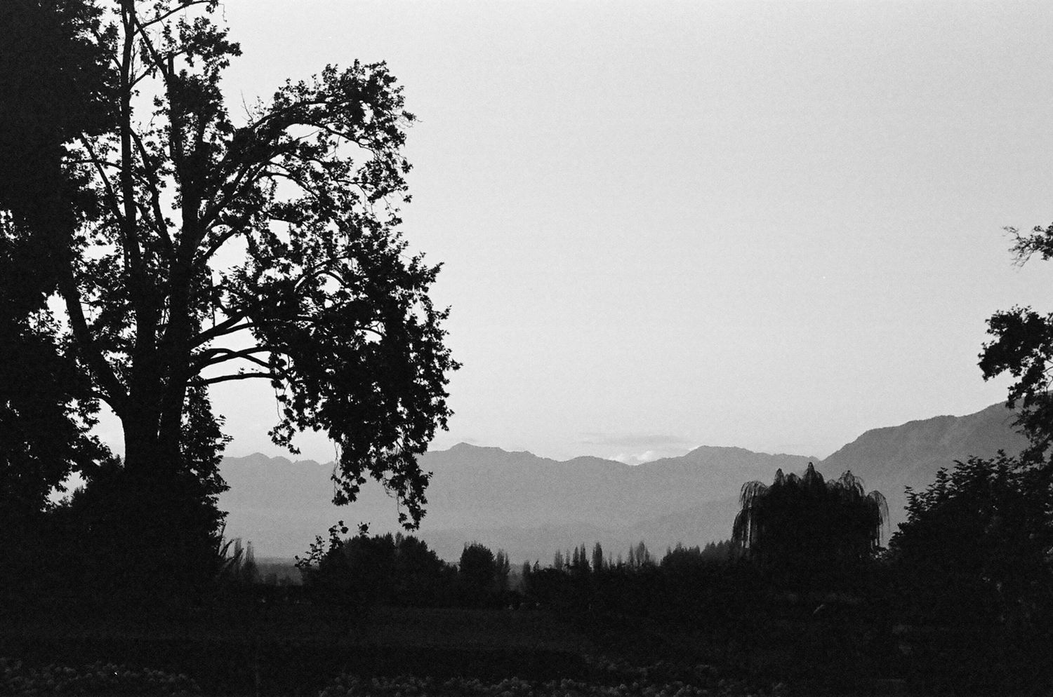 Tree and the Mountain, Srinagar 2015   Edition 1 of 2