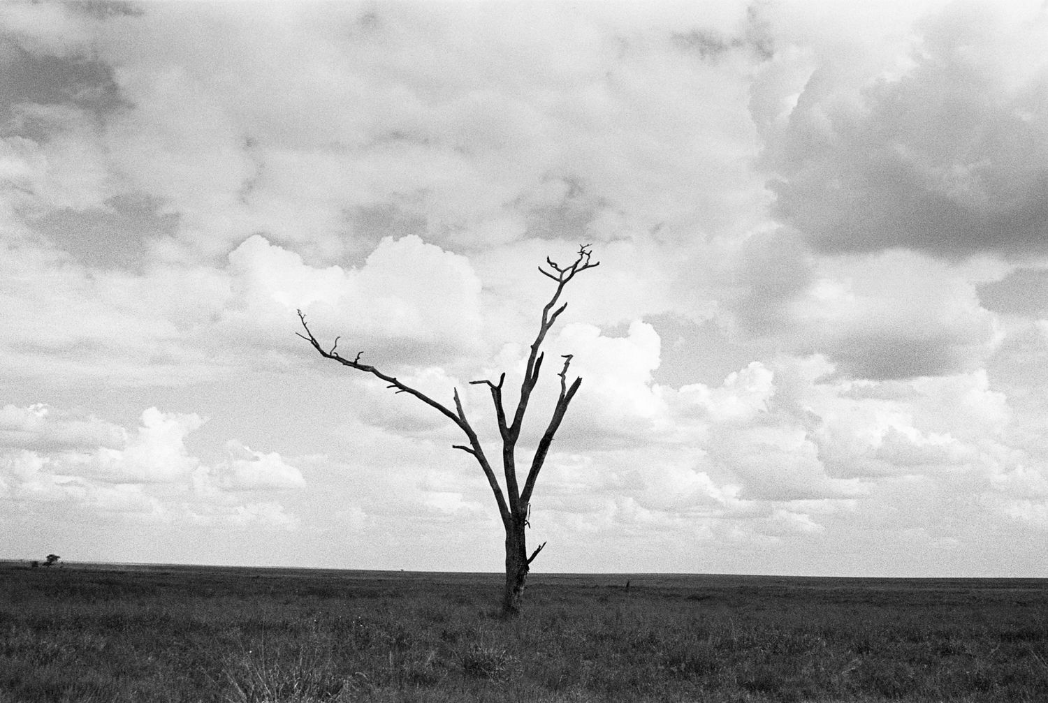 Solitary Tree, Serengeti 2016   Edition 1 of 2