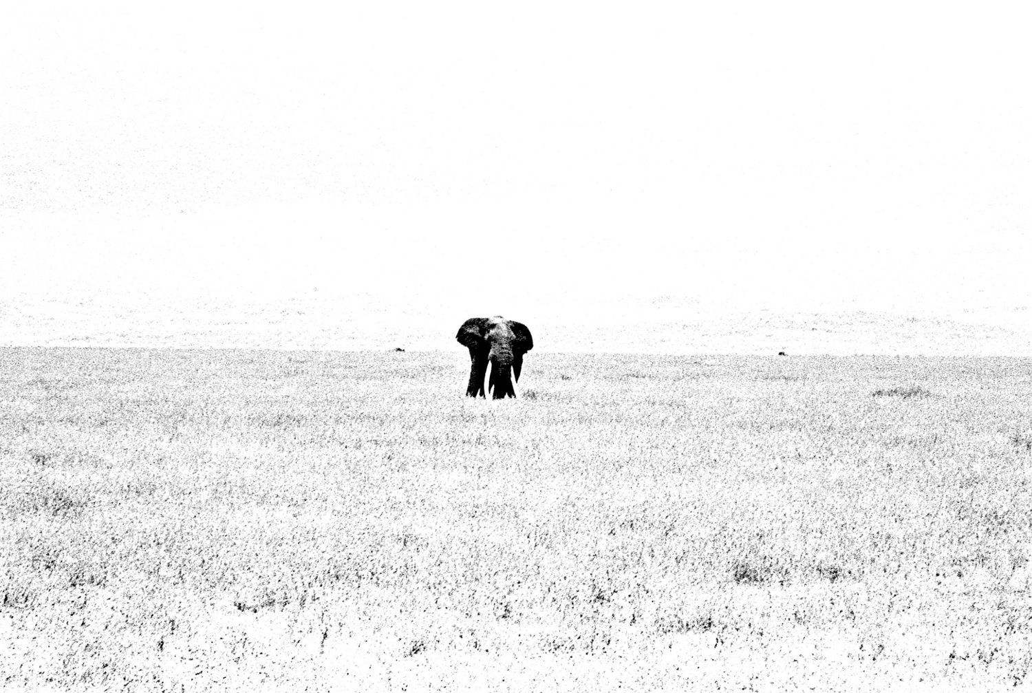 Elephant - 1, Ngorongoro 2016   Edition 3 of 5