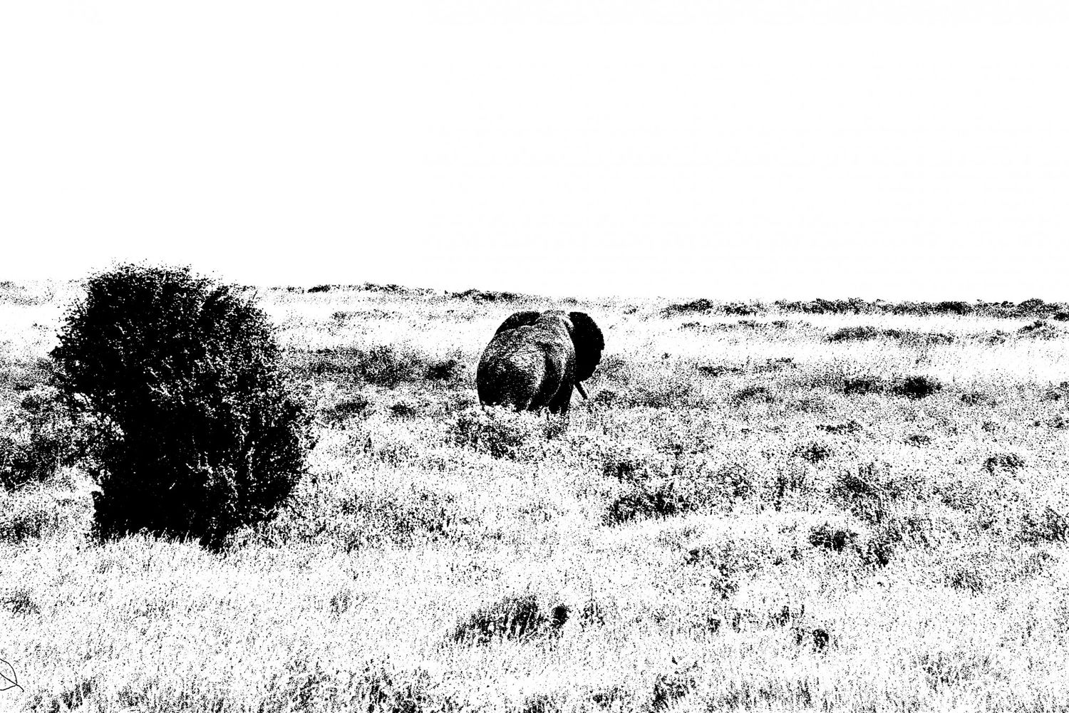 Elephant - 2, Serengeti 2016   Edition 1 of 2