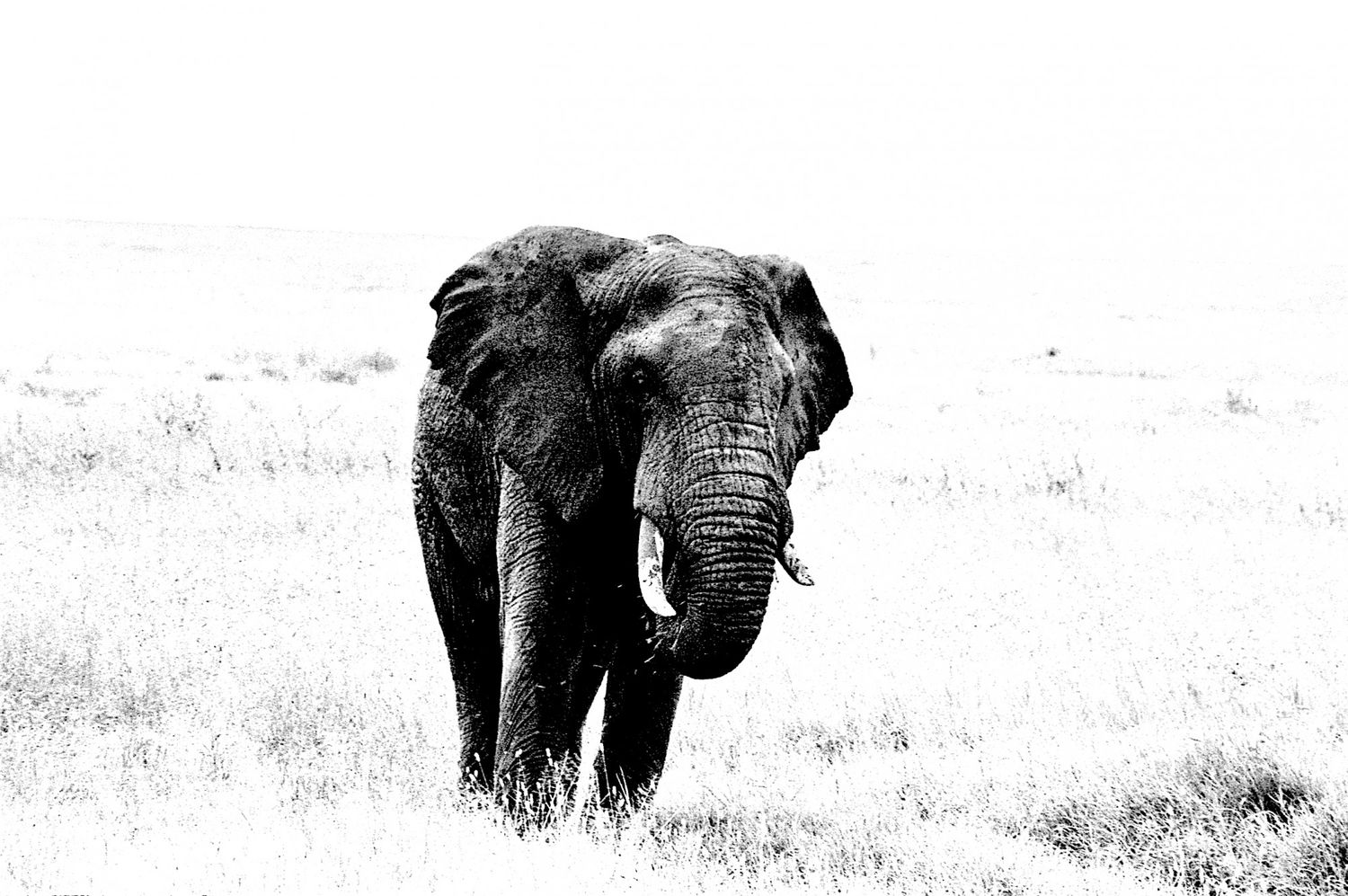 Elephant - 7, Serengeti 2016   Edition 1 of 2