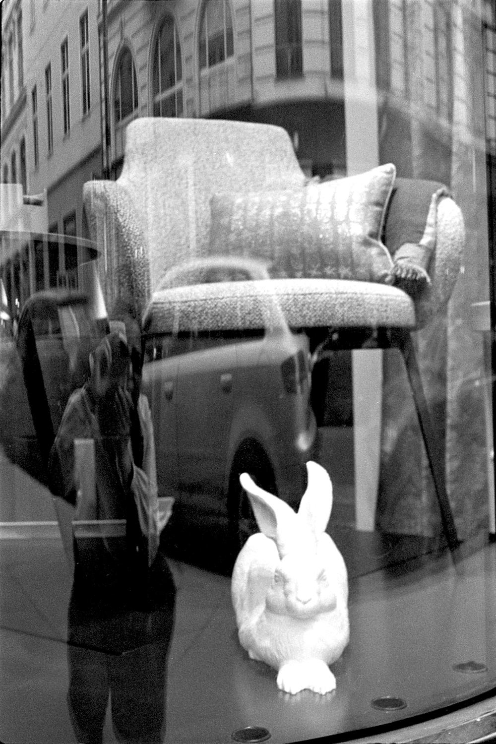 Rabbit in the Window, Vienna 2017   Edition 1 of 2