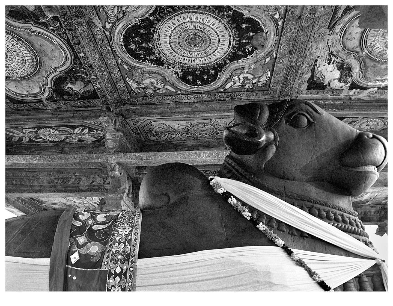 Nandi at Brihadisvara Temple-2, Thanjavur, Tanjore 2014   Edition 5 of 10
