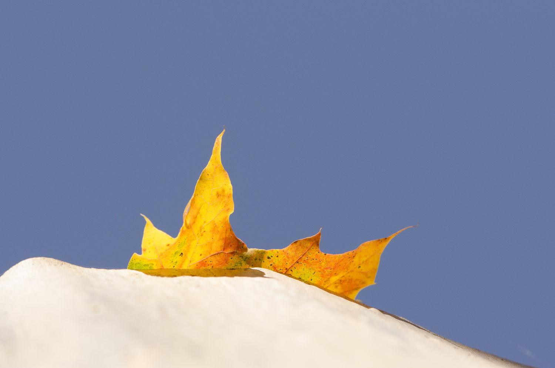 Fallen Leaf- October 27, 2013