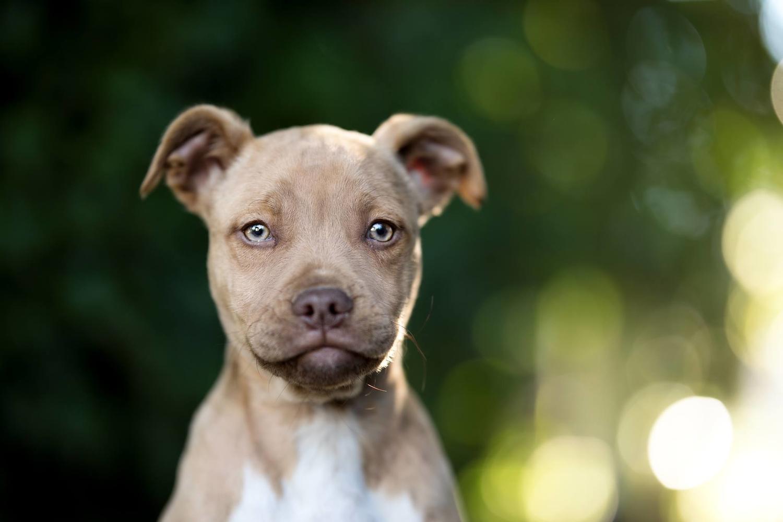 Cães para adopção no Cartaxo