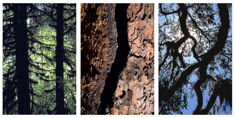Olympic Peninsula, Yosemite, Malibu