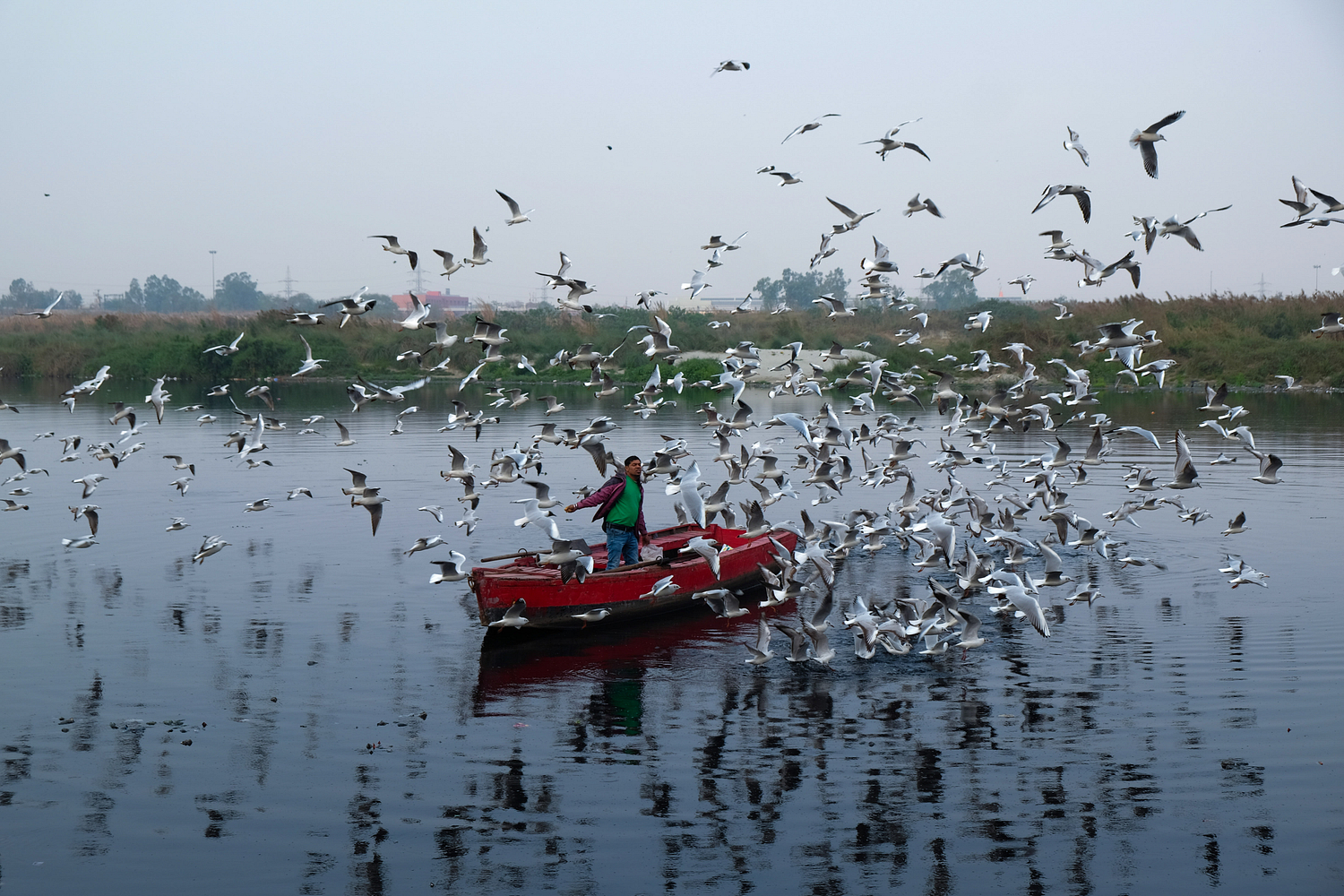 News Assignment/Pollution in Delhi: A boatman feeds seagulls on Yamuna river on a chilly evening in New Delhi on 12th February. Concentrations of tiny, airborne PM2.5 particles topped levels this week in New Delhi and Beijing - today's poster-cities for the perils of smog.