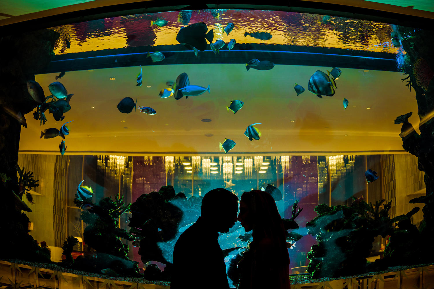 finding nemo Fish aquarium couple silhouette