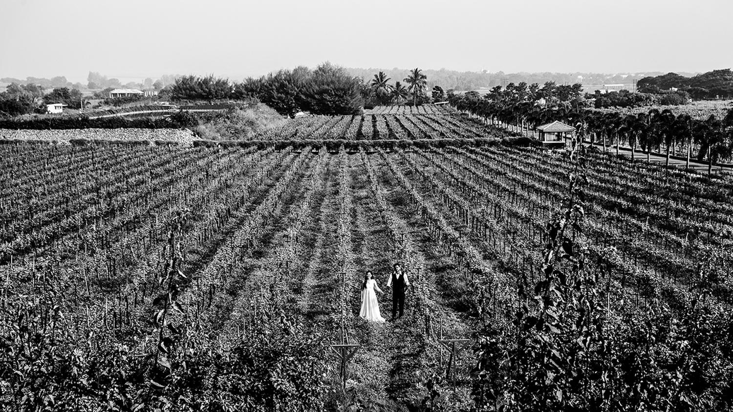 Sula Vineyard landscape shot of a couple at their prewedding