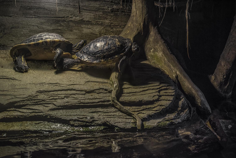 Turtles, London