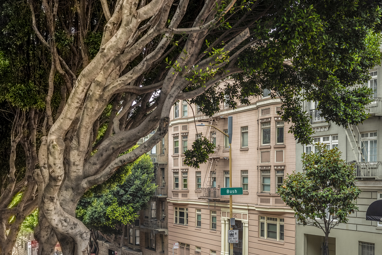 Tree detail, San Francisco, CA
