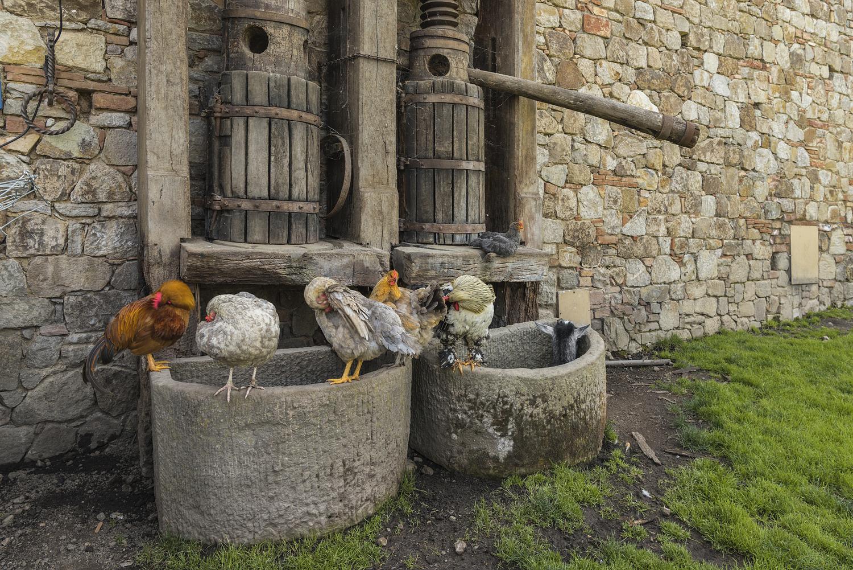 Sleeping animals, Napa Valley winery, CA