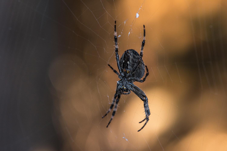 Spider detail, Surrey