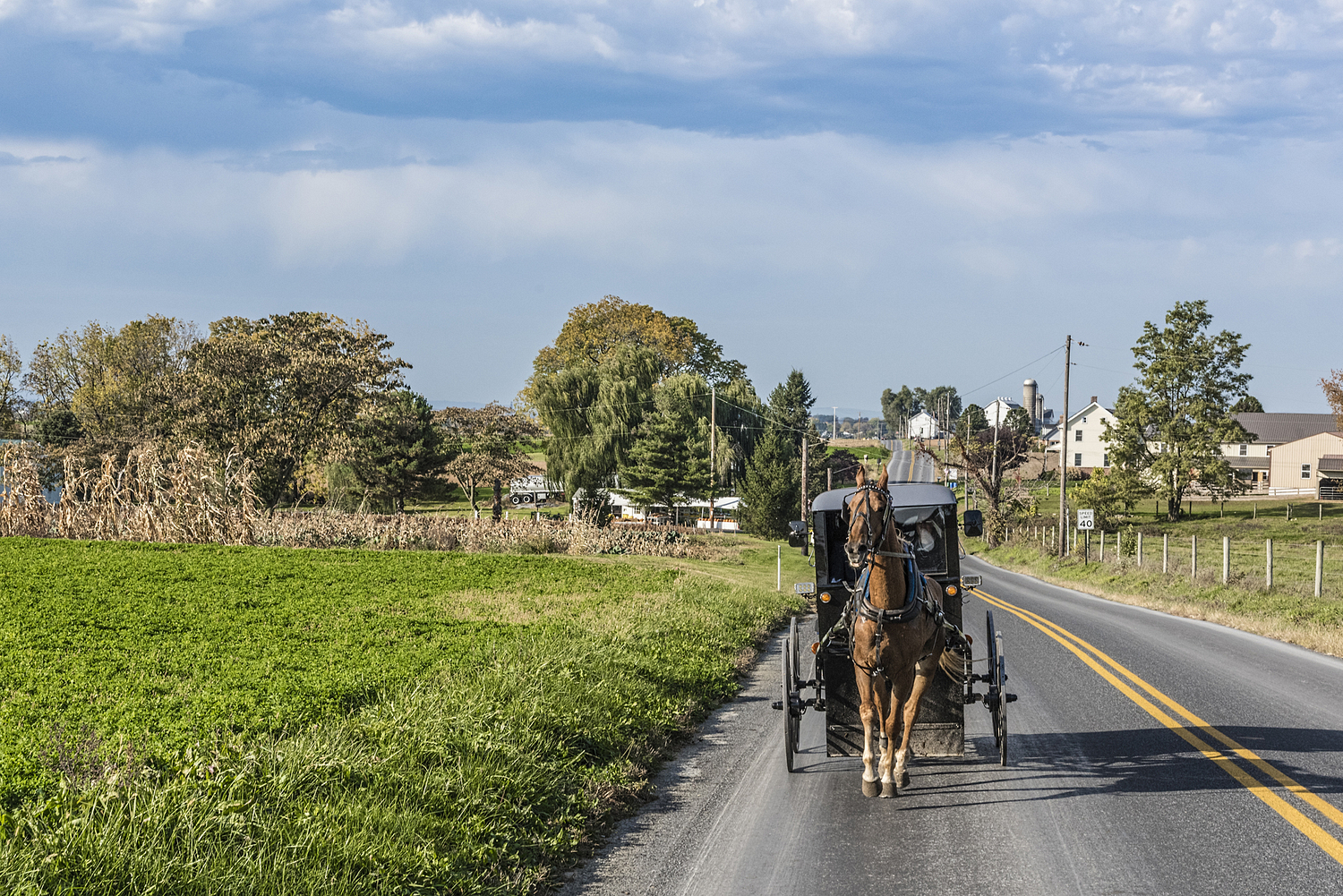 Horse with buggy, Amish country, Virginia, USA