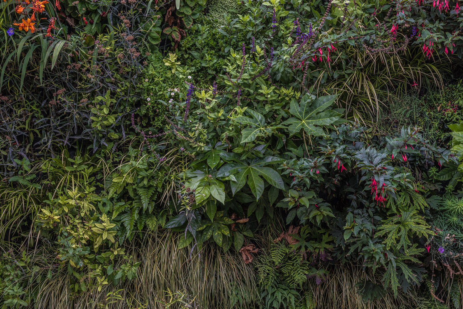 Living wall detail, Mews house, London