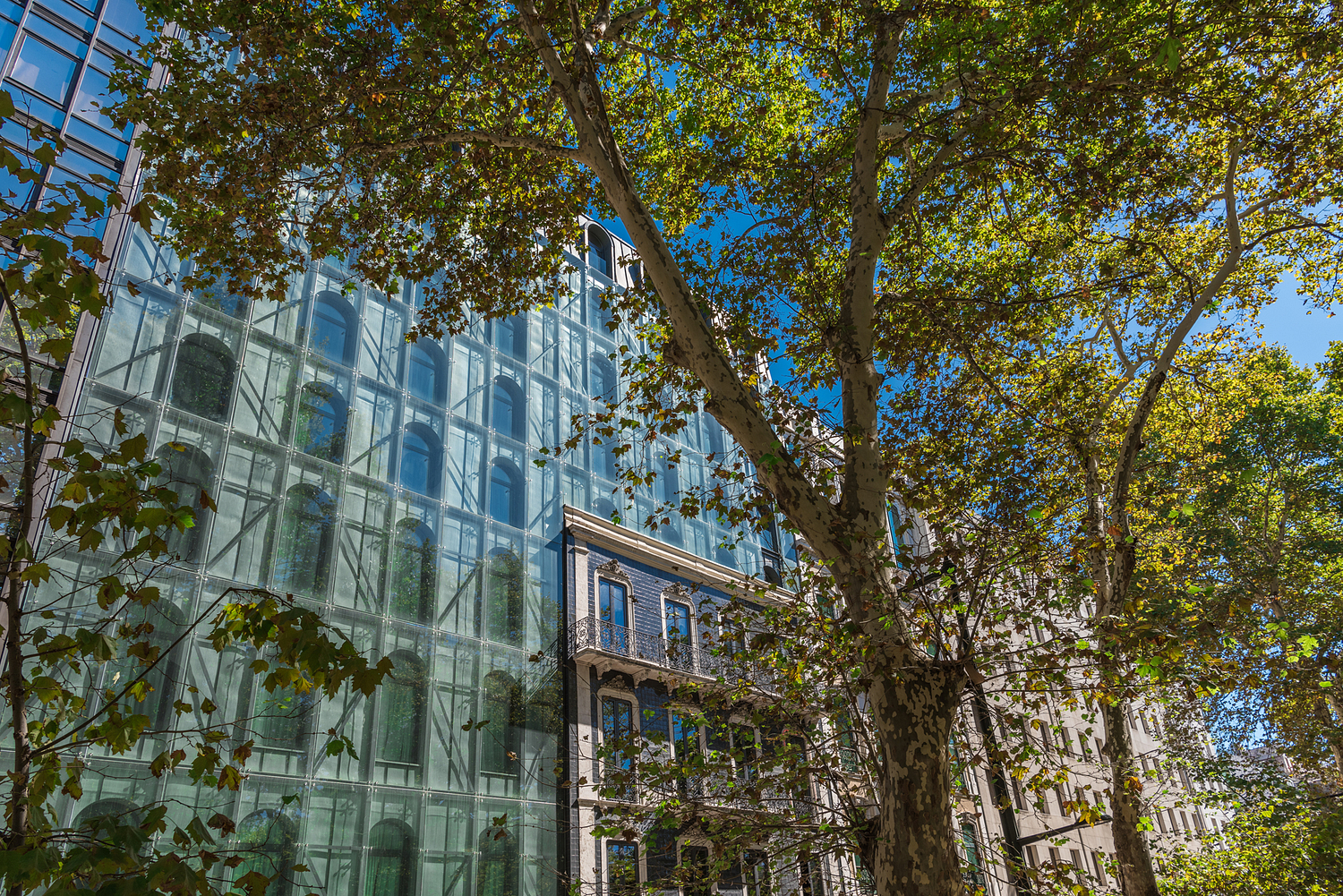 Office building through the trees, Lisbon