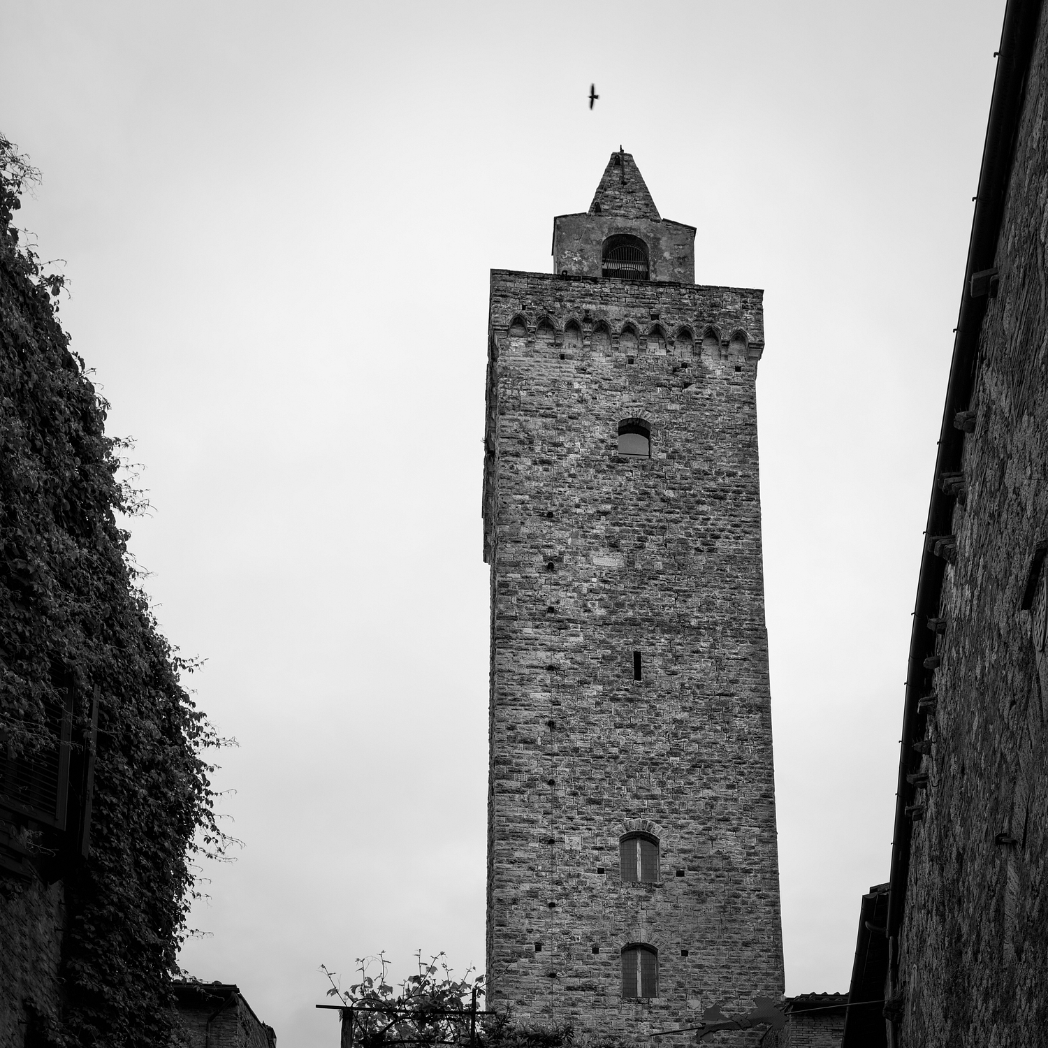 San Gimignano Tower and Bird