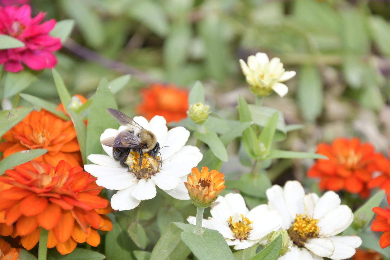 Flowers & Critters