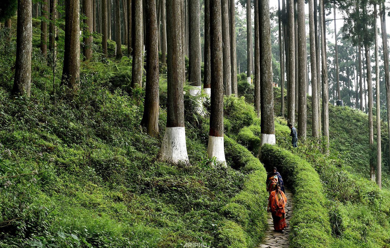 Lamahatta, Darjeeling 2019