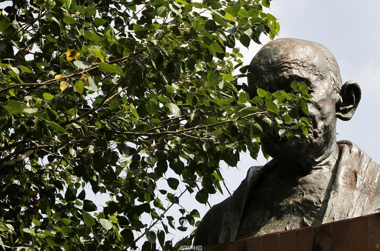 Tree Covered Gandhi