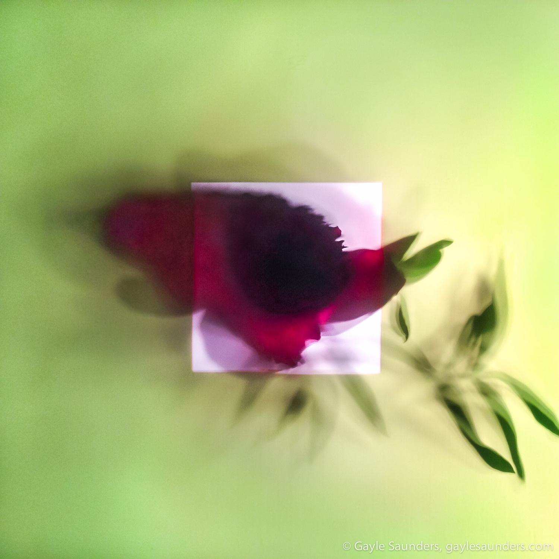 Plant Dreaming Deep 03