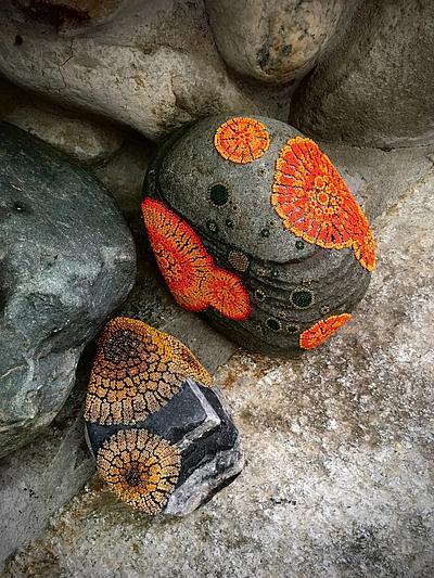 Lichen, beaded rocks
