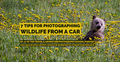 078 - 7 Tips for photographing wildlife from a car