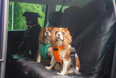Car Safety for Dogs - All you need to know!