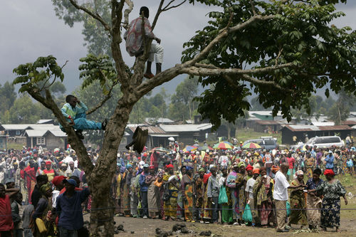 A boy sit in a tree as people line up to receive food aid from the Red Cross, Sunday, Nov. 9, 2008 in Kibati just north of Goma in eastern Congo