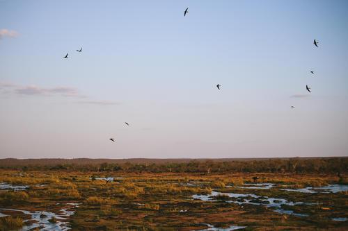 kruger national park | south africa