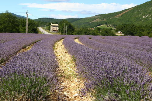 forcalquier | france