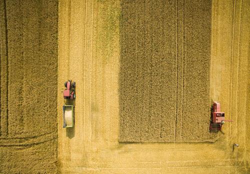 Wheat Harvest Begins Amidst Hot Summer