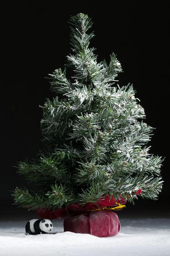 Christmas Tree and Panda- December 24, 2015