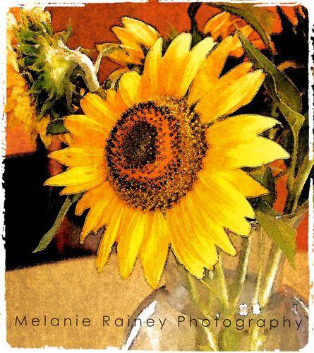Homegrown Sunflowers