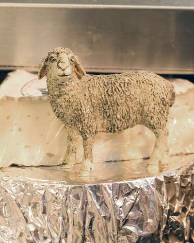 Sheep Milk Cheese