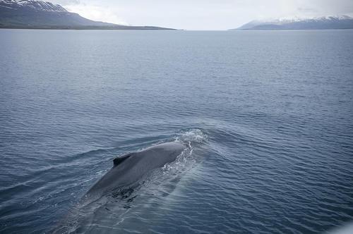 AKUREYRI | ICELAND