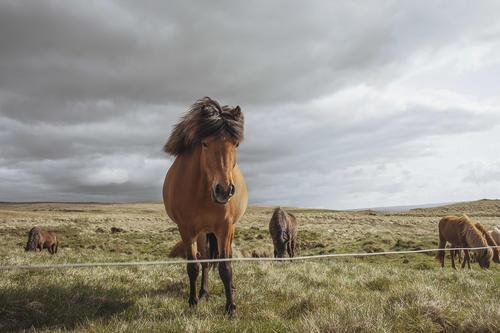 VARMAHLÍÐ | ICELAND