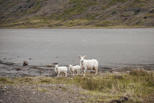 THINGMÚLI | ICELAND