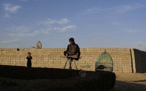 An internally displaced Afghan man selling quails waits for customers at a refugee camp in Kabul