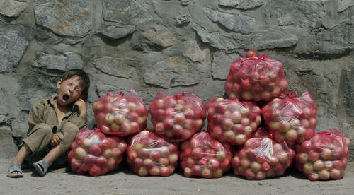 A boy yawns as he waits for customers at his roadside apple stall in Kabul
