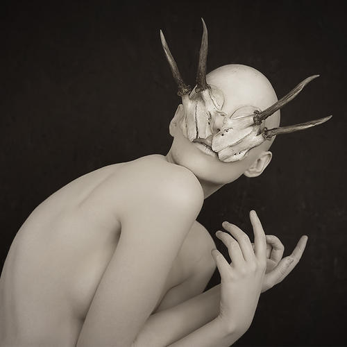 ANTLERMORPH /  / PHOTOGRAPHED BY ADRIAN SERINI