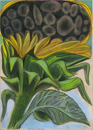 Black Hole Sunflower