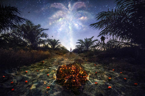Aspire to inspire - World Palm Portraits Competition 2015 Fine Art Grand Prize