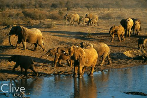 Elephants in the Madikwe Game Reserve, South Africa.