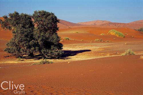A splash of green shrubbery in the vast and arid wilderness of the Namid Desert, close to Sossusvlei, Namibia.